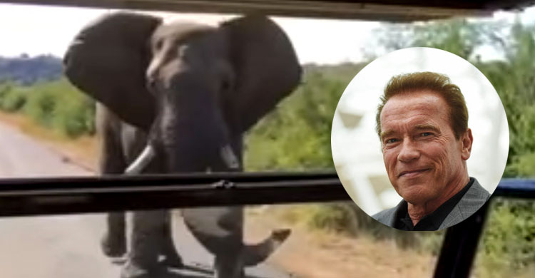Arnold Schwarzenegger Charged By Wild Elephant